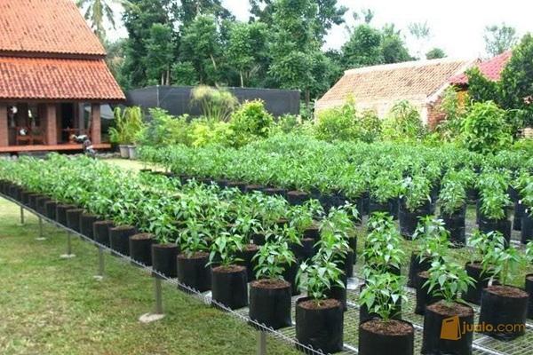 img menanam tanaman di polybag