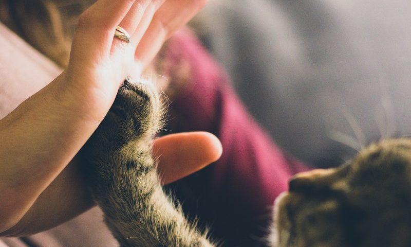 gambar bermain dengan hewan peliharaan